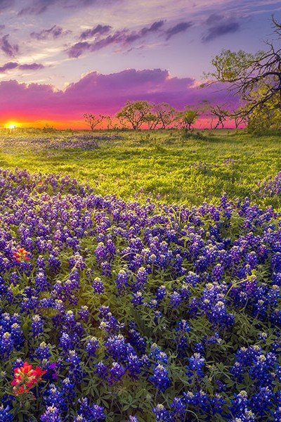 Flowery meadow at sunrise in Northeast Texas
